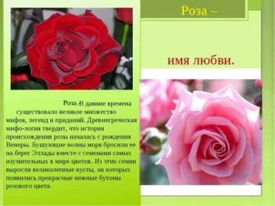 Что значит имя розы