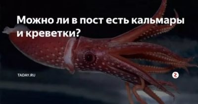 Можно ли в пост есть кальмаров