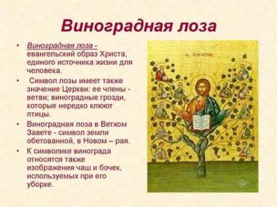 Что означает виноградная лоза в христианстве