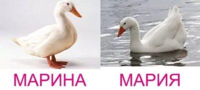 Как правильно Мария или Марина